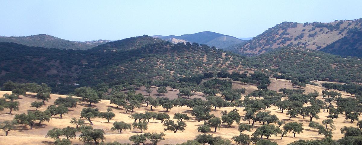 Sierra espagnole