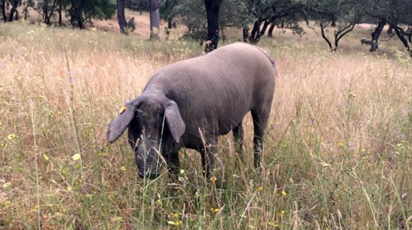 Finca Montefrío : une ferme tout en bio au cœur de la Sierra de Aracena - Picos de Aroche