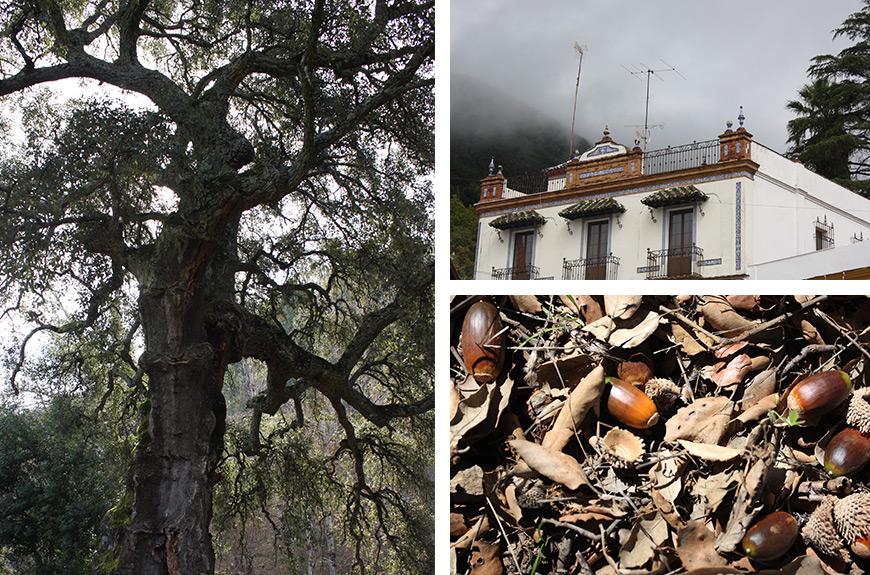 Otoño Jabugo Sierra Aracena