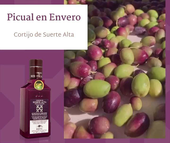 Extra virgin olive oil from Andalusia